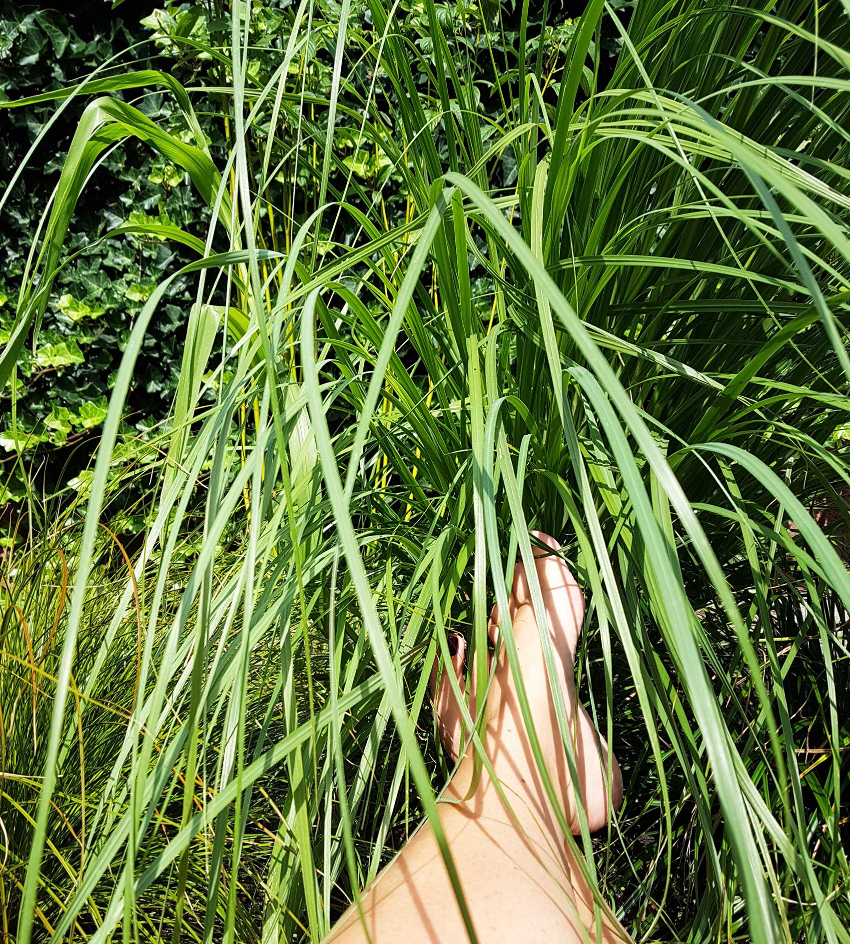 Grootse fantasiën over doodgaan. Blote voeten in het hoge gras, met gelakte teennagels. Ultiem doodgaan op een kleedje in het gras. In de zon, met een glas wijn.